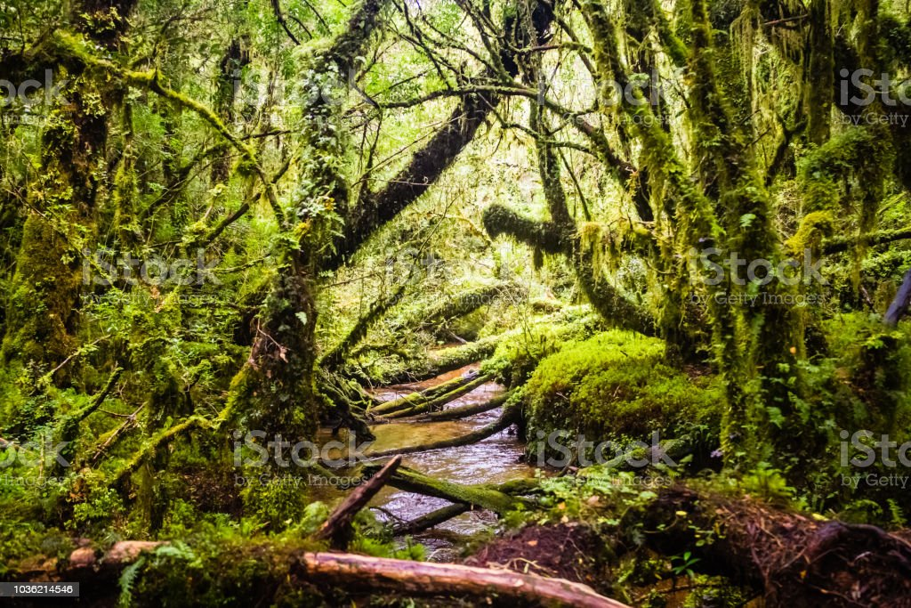 Detail Of The Enchanted Forest In Carretera Austral Bosque Encantado Chile Patagonia Stock Photo Download Image Now Istock