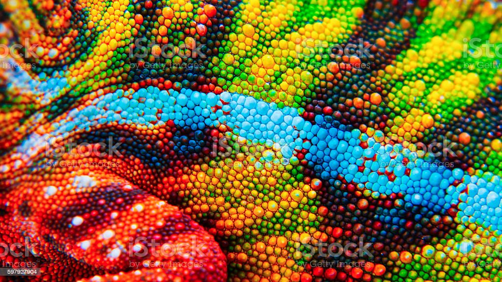 Detail of the particular skin of a chameleon. stock photo