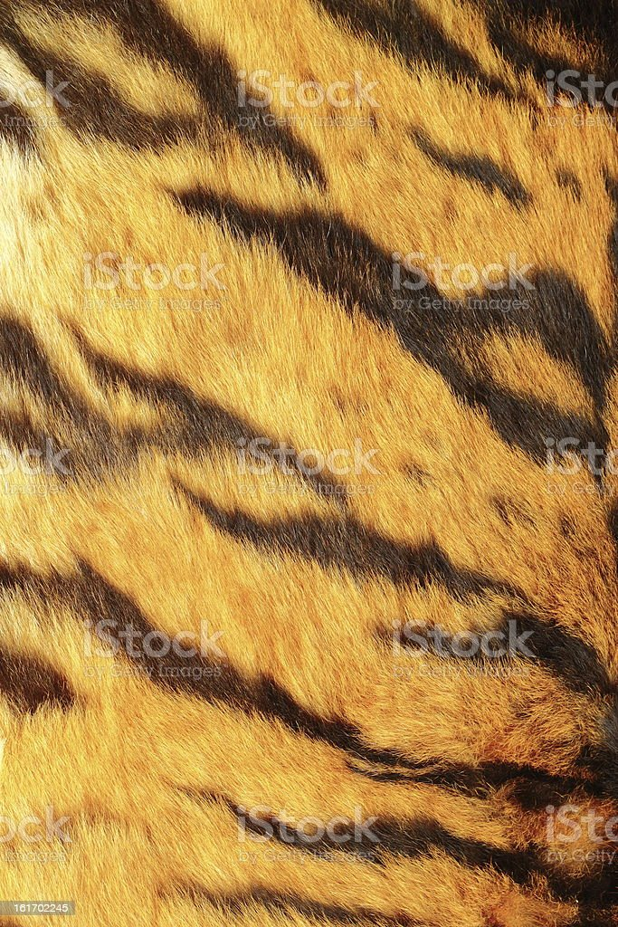 detail of tiger stripes royalty-free stock photo