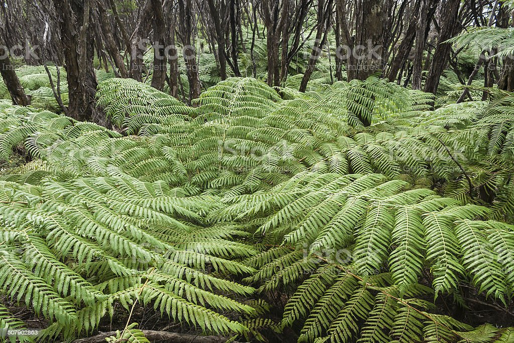 detail of tree fern growing in rainforest stock photo