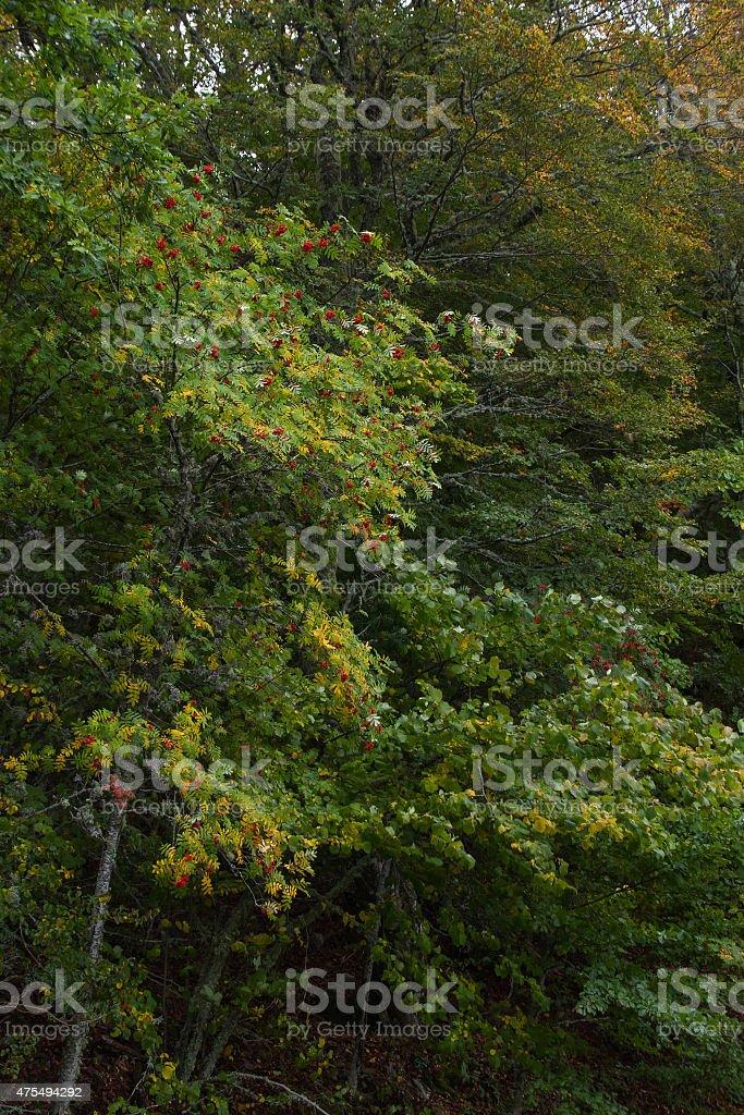 Detail of trees in forest -  Arboles en Bosque stock photo