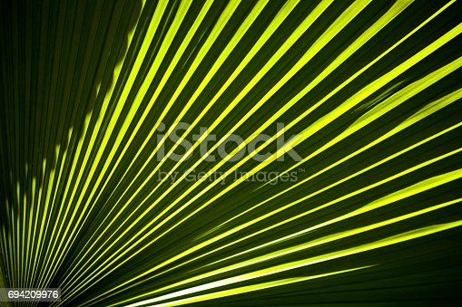 istock Detail of tropical palm leaves 694209976