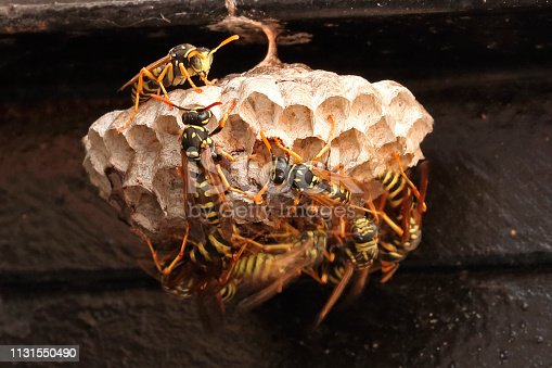 Detail of wasp nest