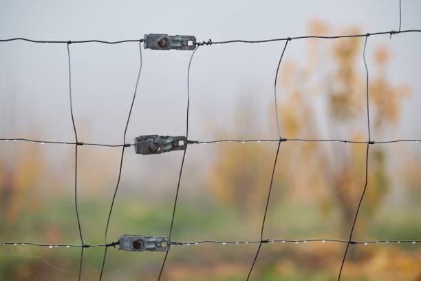 Detalle de cerca mojada en un día brumoso en el pasto - foto de stock