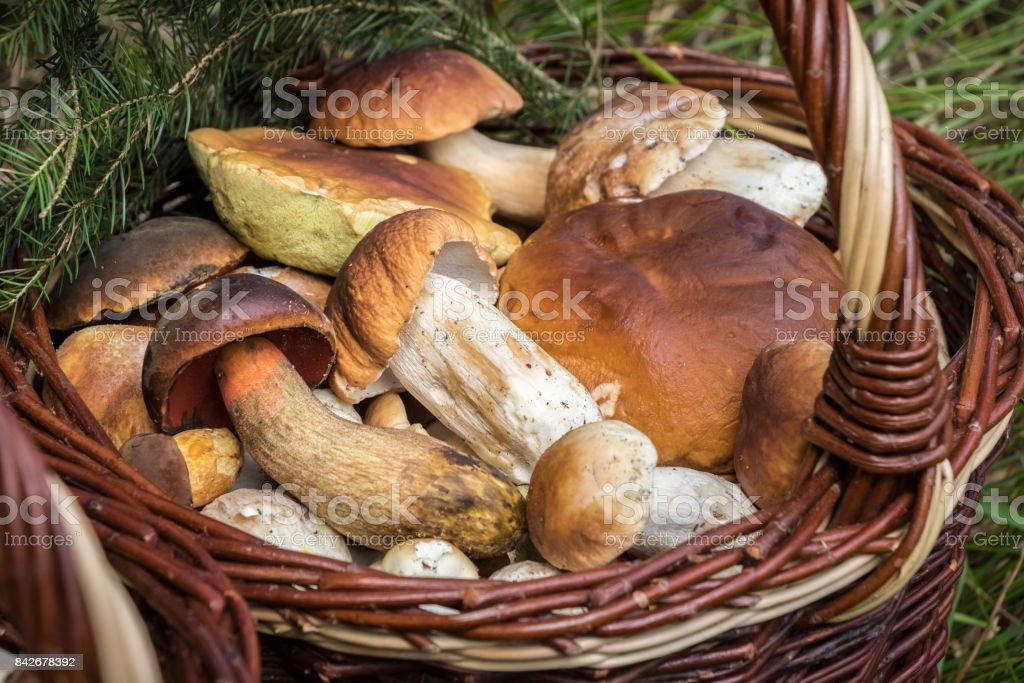 Detalle de la cesta de mimbre con hongos comestibles - foto de stock