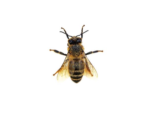 Incredible Bee Archiver file types | jcsqpq.me