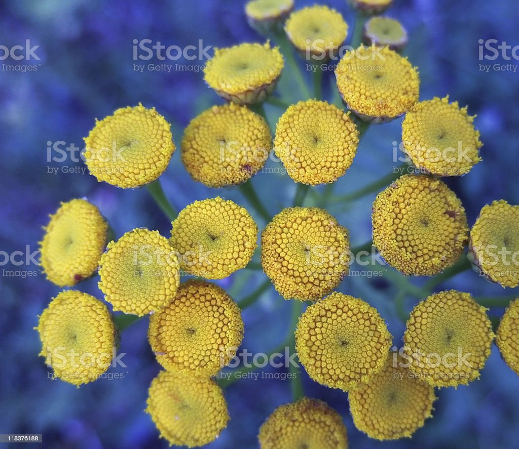 detail of yellow flowers royalty-free stock photo