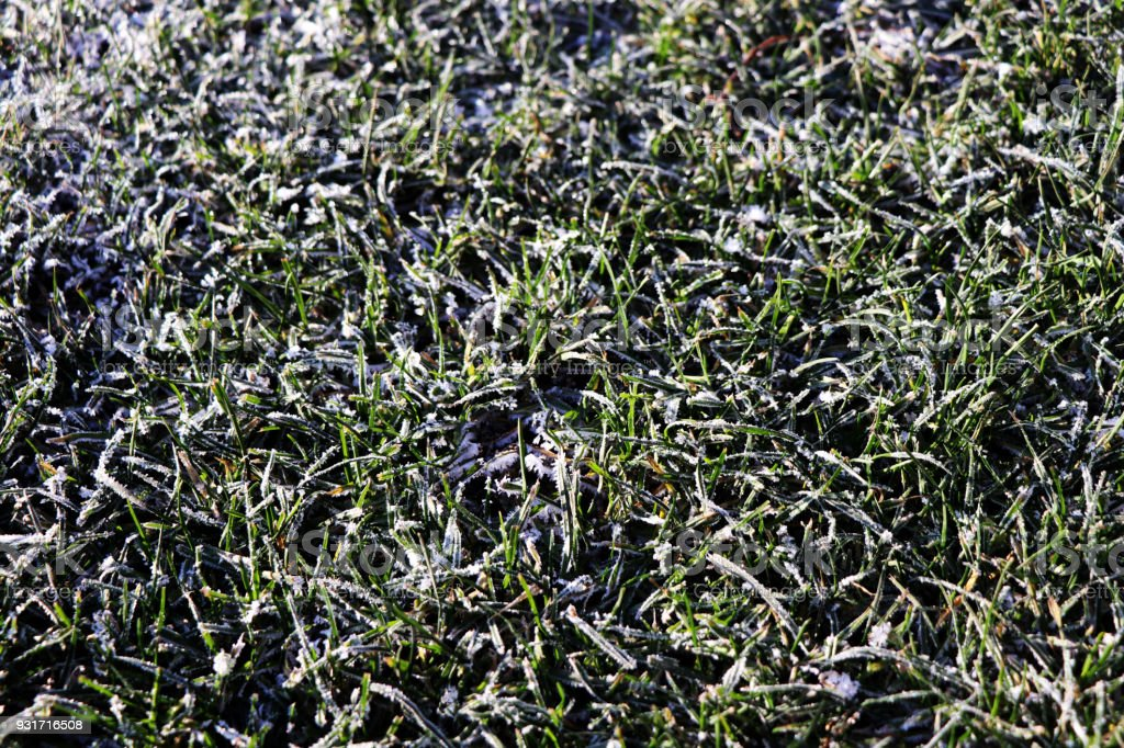 A detail on grass covered with hoarfrost stock photo