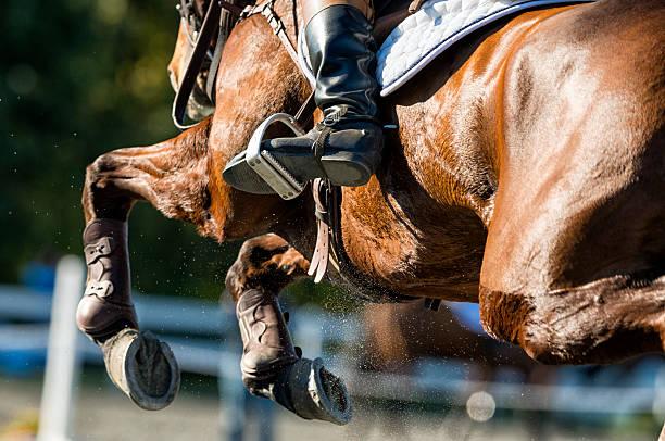 detail shot of a show jumper horse in mid flight - hästhoppning bildbanksfoton och bilder
