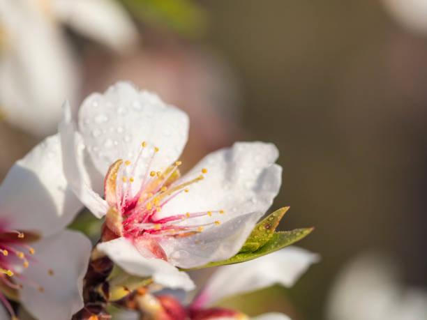 Detail tree flower with water drops picture id1299642476?b=1&k=6&m=1299642476&s=612x612&w=0&h=9hy7kphilgj ynfdvwtud9cckna2xrnlx0cema3yvy0=