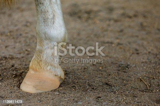 Detail View Of Horse's Hoof