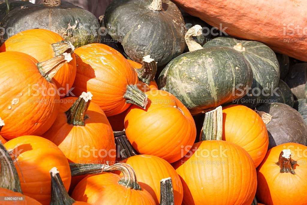 Detail view of various pumpkins royalty-free stock photo