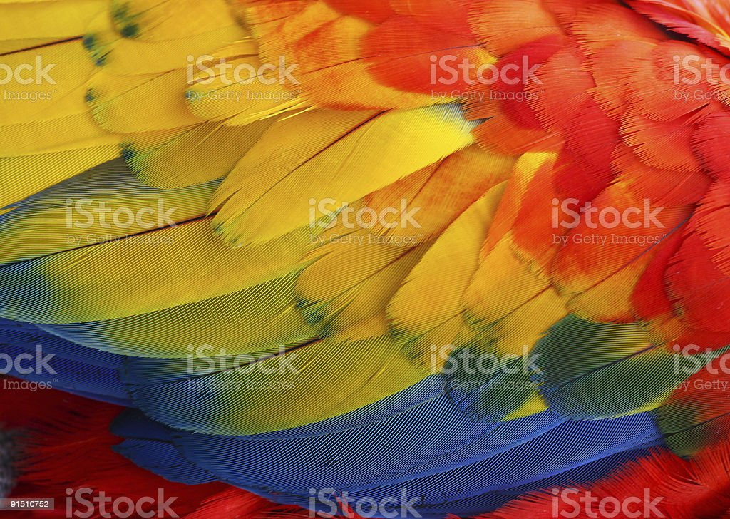 Detailed close-up of bright multicolored feathers of parrot stock photo
