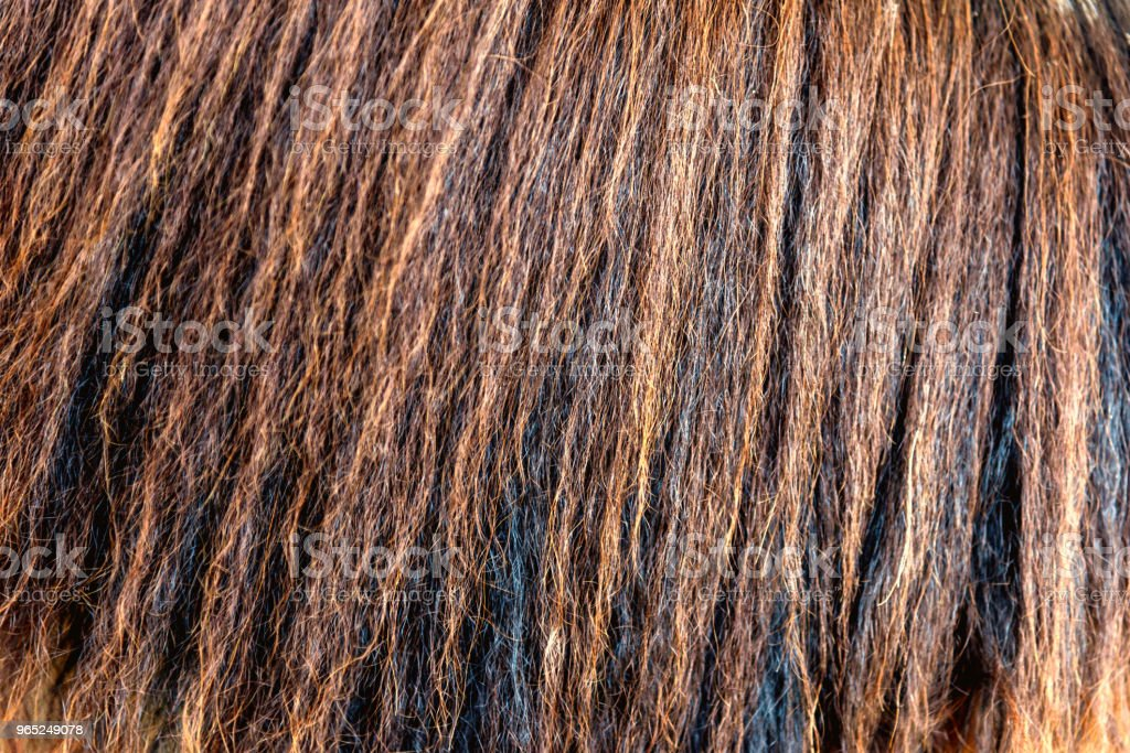 detailed horse hair or horse mane - texture, background royalty-free stock photo