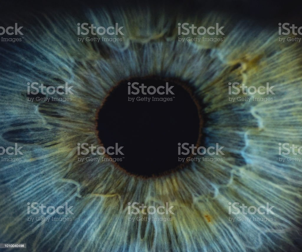 Detailed Macro Of Blue Woman Human Eye royalty-free stock photo