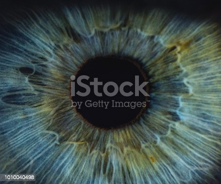 A detailed macro shot of a blue woman human eye.
