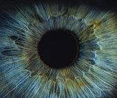 A detailed macro shot of a blue woman human eye.