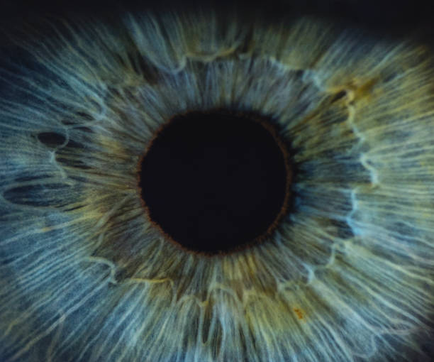 detailed macro of blue woman human eye - eye stock pictures, royalty-free photos & images