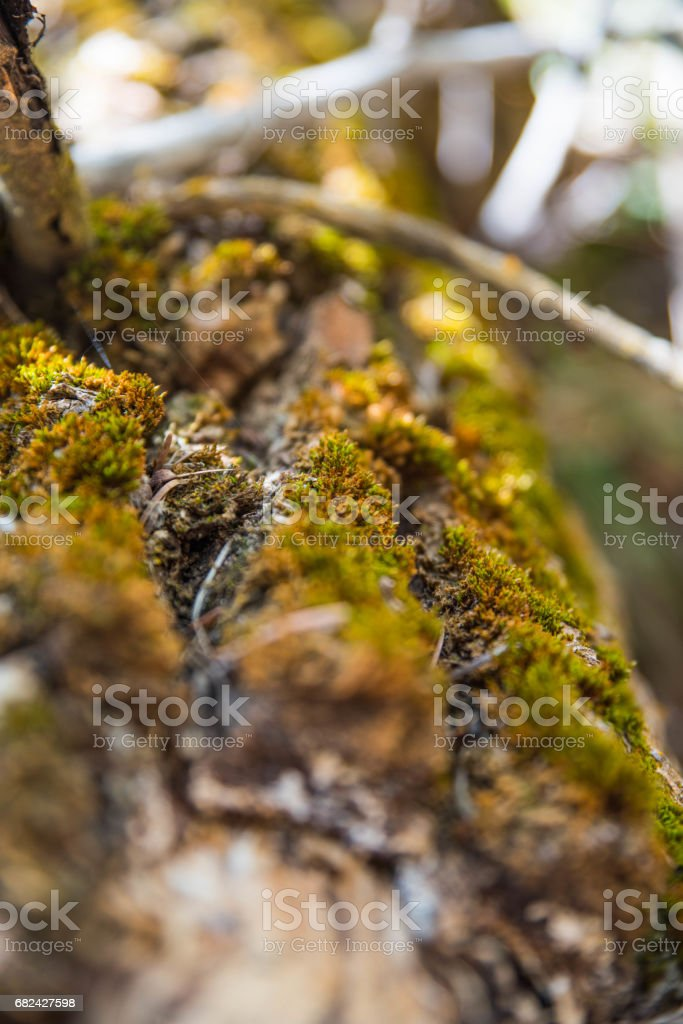 Detailed Moss royalty-free stock photo