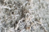 Detailed photography of constructional material with asbestos fibres. Health harmful and hazards effects.