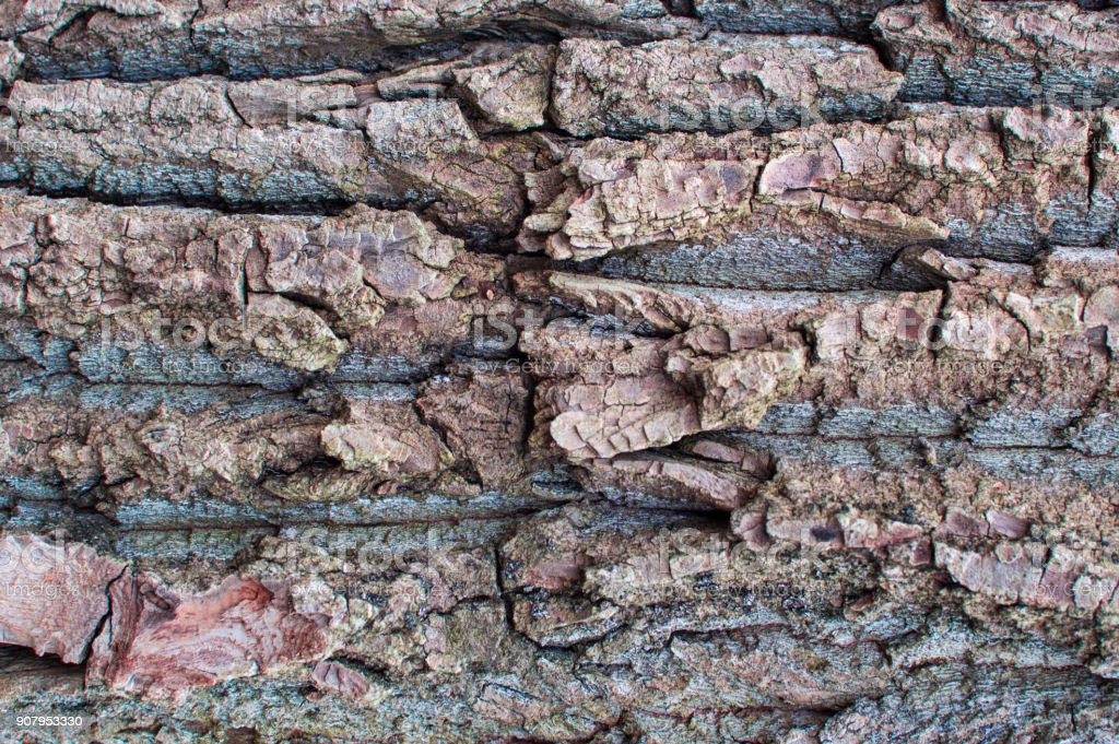Detailed texture of the tree bark, close-up view stock photo