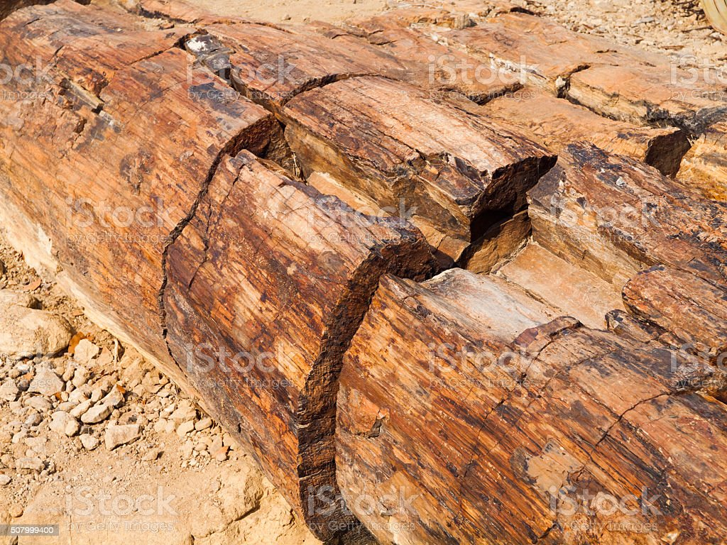 Detailed view of petrified tree trunk stock photo