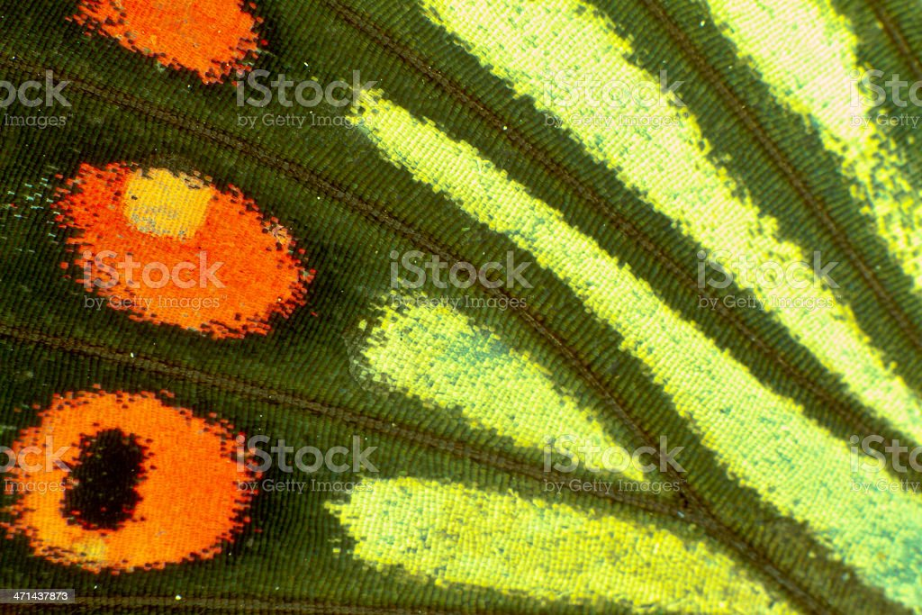 Details of butterfly wings stock photo