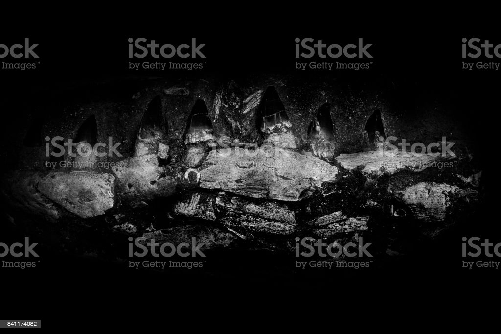 Details of jaw of dinosaur fossil stock photo