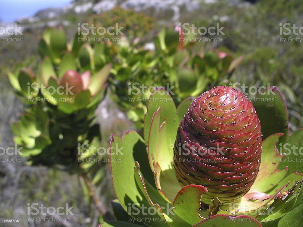 Details der Natur in Südafrika – Foto