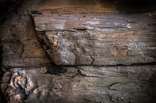 istock Details patterned surface texture of the black wooden coal 490776556
