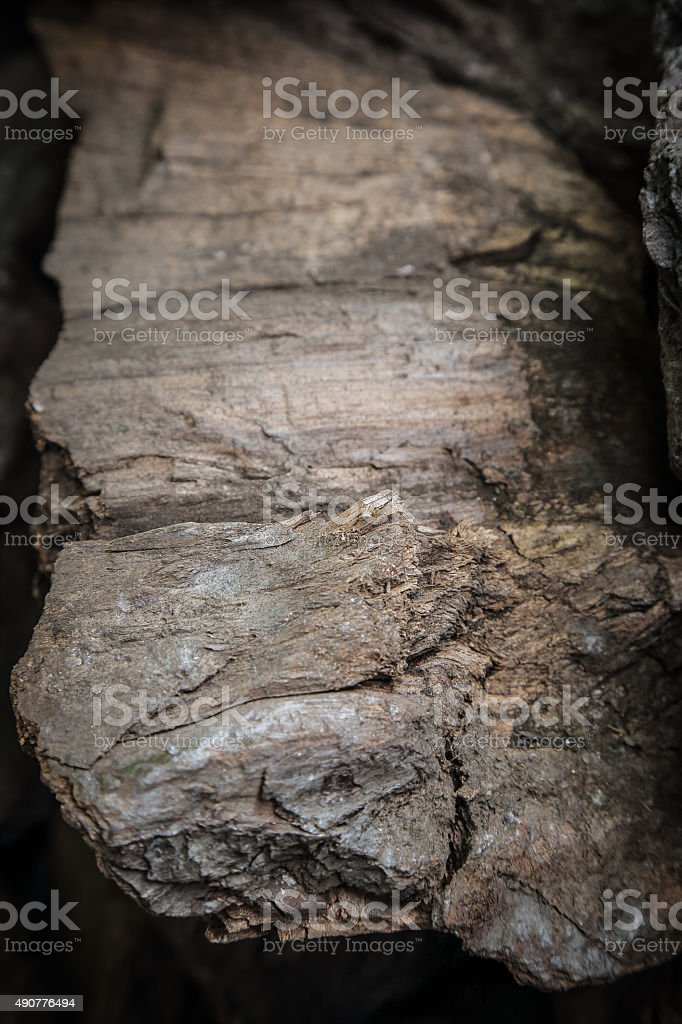 Details patterned surface texture of the fossile wood, coal stock photo
