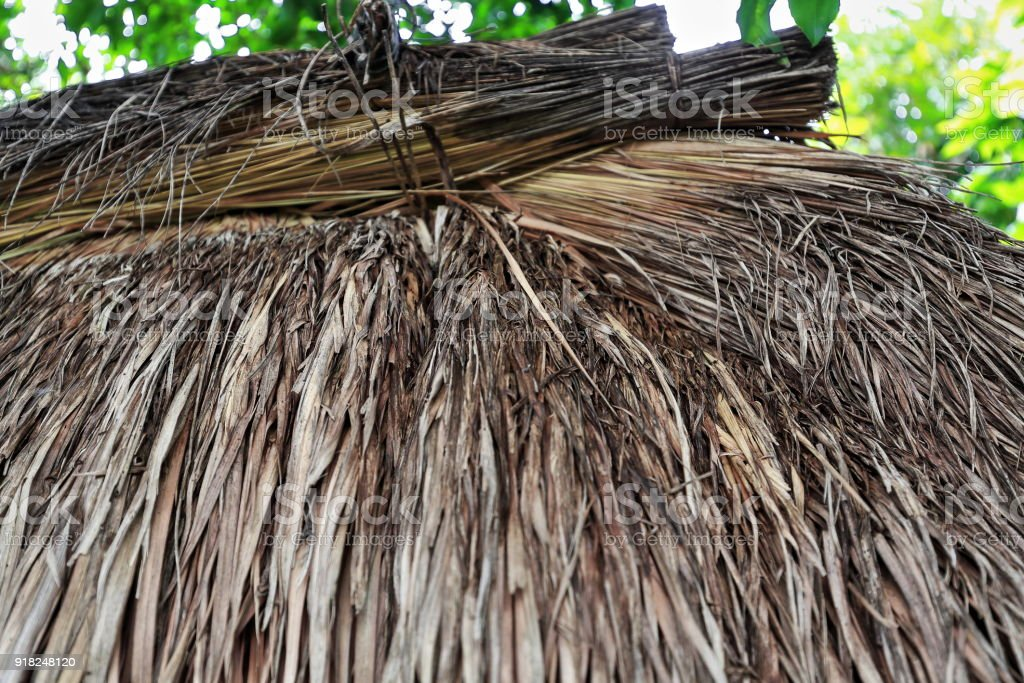 Detail-thatched roof of ulog-olog communal dormitory for girls. Bontoc-Mountain province-Philippines. 0207 stock photo