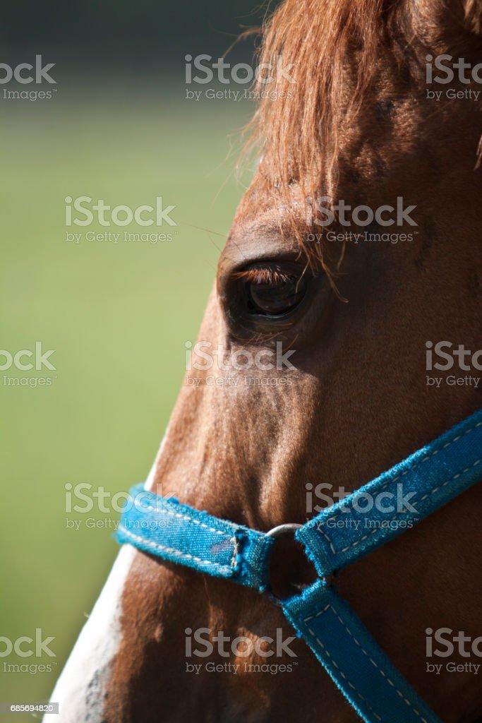 Detalle de caballo ロイヤリティフリーストックフォト