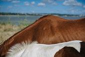 istock deux chevaux au bord de la mer 941333796