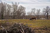 istock Deux chevaux 1129190334