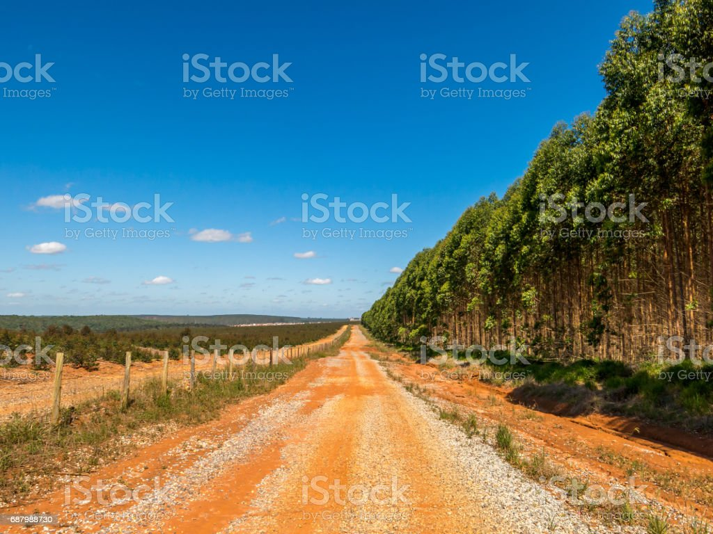 Devastated land in eucalyptus plantation in Brazil stock photo