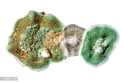 the development of fungal mold in food, green mold on white isolate background, microbiology macro abstract background