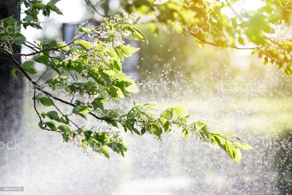 庭園や公園に水をまくための装置。 - しぶきのロイヤリティフリーストックフォト