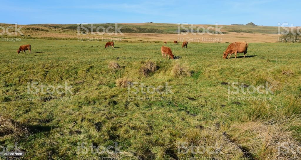 Devon England stock photo
