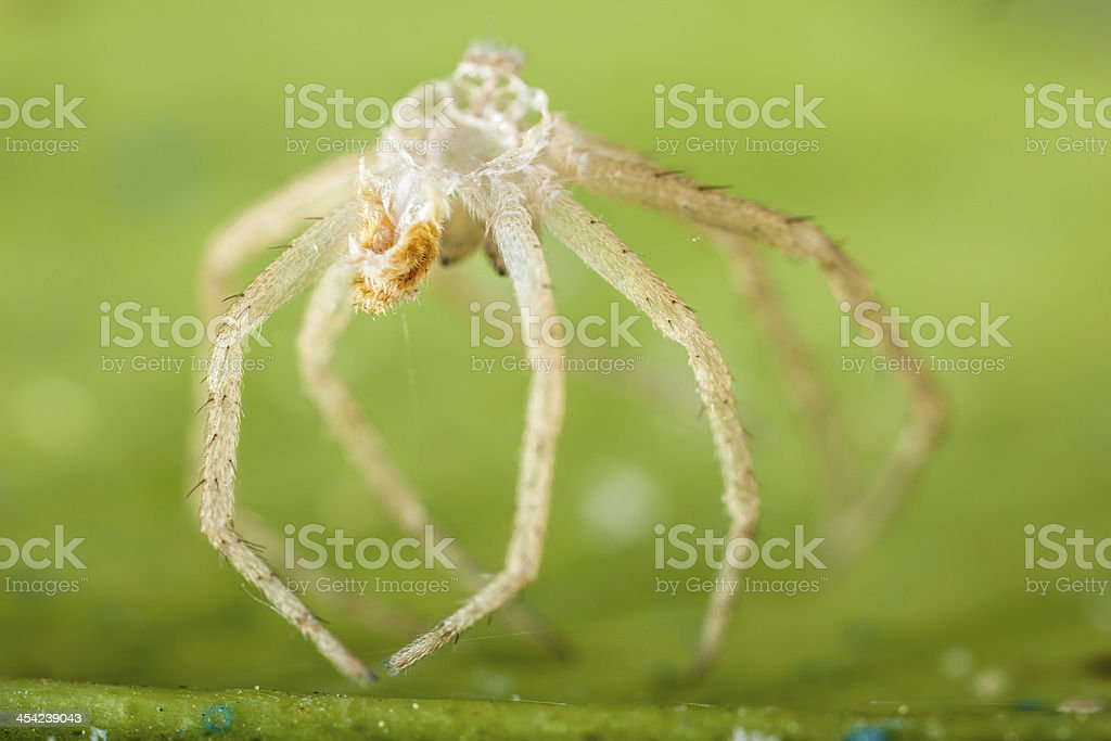 Devoured spider royalty-free stock photo