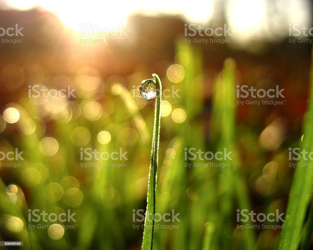 Dew Drop on Grass royalty free stockfoto