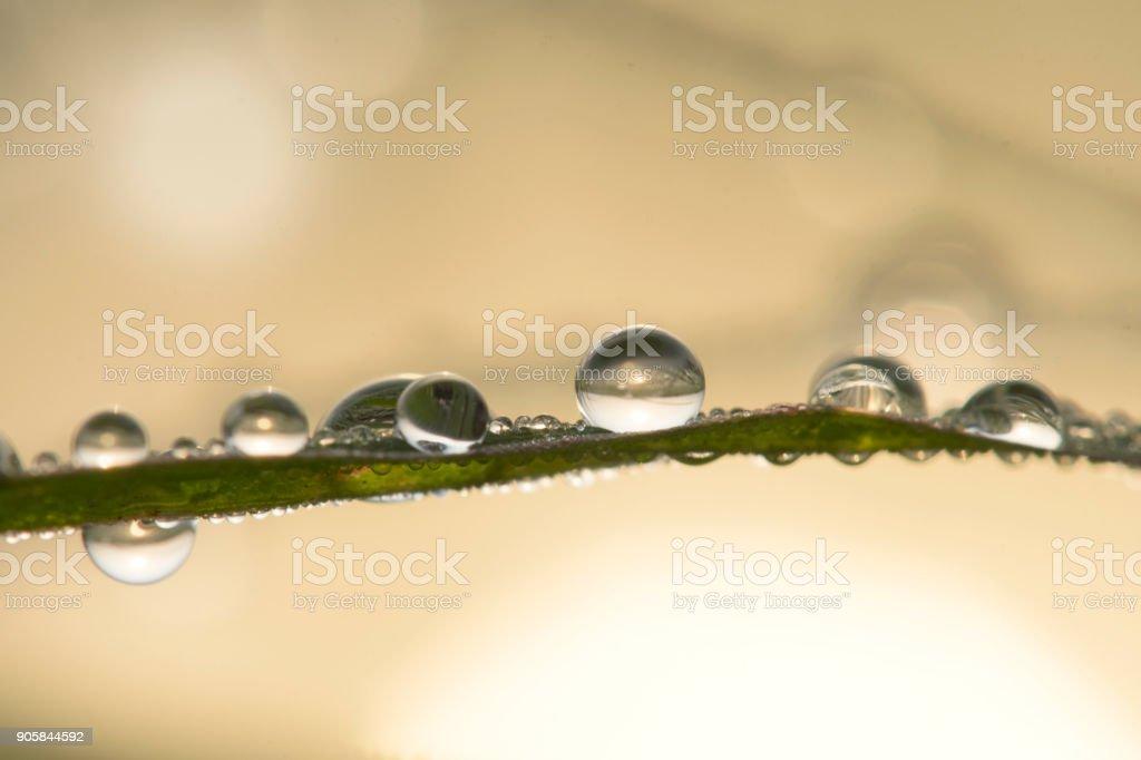 Dew droplets with sun reflection in the morning. stock photo