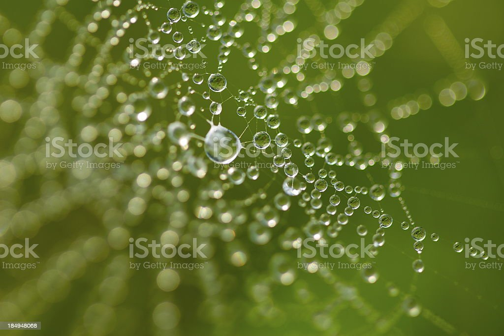Dew drops on a web stock photo
