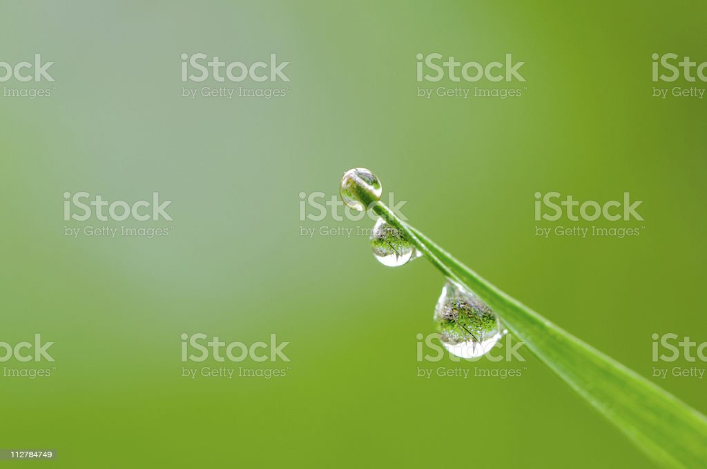 Dew drops on blade of grass royalty-free stock photo