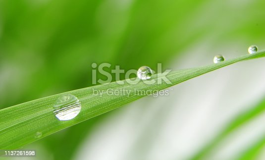 istock Dew drops on fresh green grass blade 1137261598