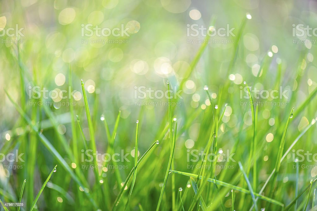 Dew drops on green grass stock photo