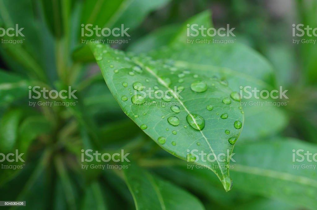 Dew Drops on Leaf stock photo