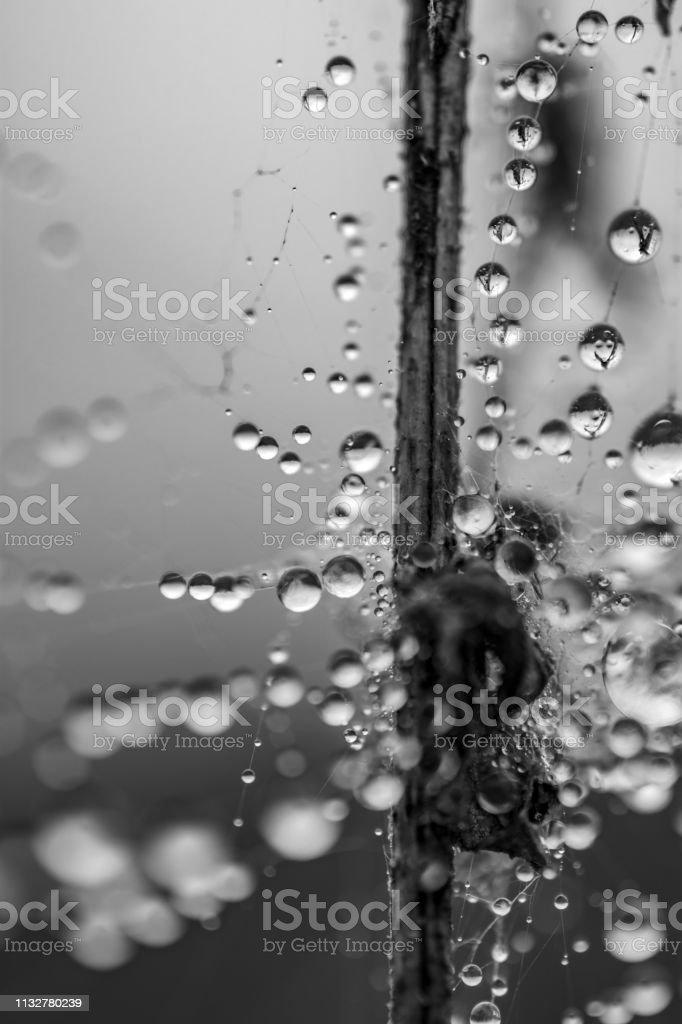 dew drops on spider web monochrome stock photo