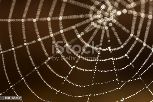 autumn web morning