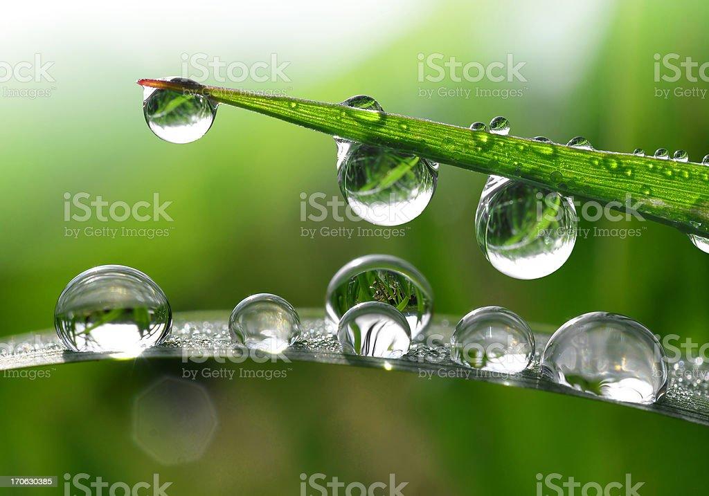 Dew drops royalty-free stock photo